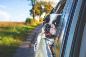 The Top Ten Driving Distractions...Pets